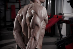 Bodybuilder posing in gym. Perfect muscular male back Stock Image
