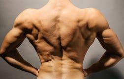 Bodybuilder's back Stock Images