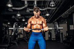 Bodybuilder sportsman working out with a barbell in gym, doing biceps training. Young handsome caucasian bodybuilder sportsman working out with a barbell in gym Royalty Free Stock Photography