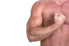 Bodybuilder torso. On white background Royalty Free Stock Photography