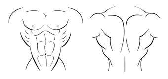 Bodybuilder torso line-art. Illustration  on white Royalty Free Stock Photos