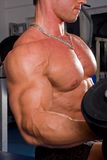 Bodybuilder training. In the gym Stock Photos