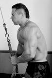 Bodybuilder training Royalty Free Stock Photography