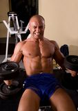 Bodybuilder training Stock Photography