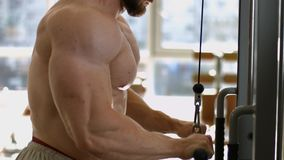 Bodybuilder training in gym. Sportsman doing pull-ups. Bodybuilder training in gym. Bodybuilder building up muscles stock video