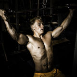 Bodybuilder training in the gym. Bodybuilder training weights in a gym royalty free stock photo