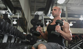 Bodybuilder working out with bumbbells weights at the gym Royalty Free Stock Photo