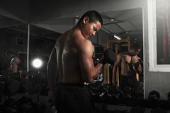 Bodybuilder working out with dumbbell weights at the gym. Man bodybuilder doing exercises with dumbbell. Fitness muscular body stock image