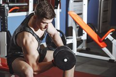 Bodybuilder working out with dumbbell weights at the gym. Man bodybuilder doing exercises with dumbbell. Fitness muscular body stock photography