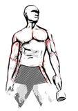 Bodybuilderillustratie Royalty-vrije Stock Afbeelding