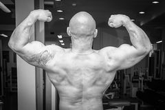 Bodybuilders at the gym Royalty Free Stock Photography
