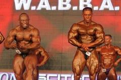 Bodybuilders posing Royalty Free Stock Image