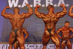 Bodybuilders posing Royalty Free Stock Image