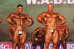 Bodybuilders posing Royalty Free Stock Photography