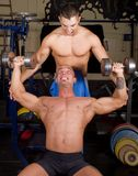 Bodybuilders training Royalty Free Stock Photography