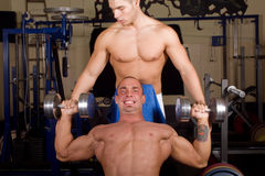 Bodybuilders training royalty free stock images