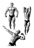 Bodybuilders trio Stock Image