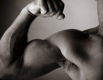 Bodybuilding Royalty-vrije Stock Afbeeldingen