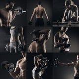 Bodybuilding royaltyfri foto