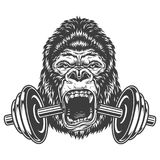 Bodybuilding concept with gorilla. And cracked dumbel. Vector illustration vector illustration