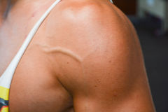 Bodybuilding. Detail of an athlete exercising Royalty Free Stock Photos