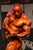 bodybuildingmästerskapfitparade Arkivfoton