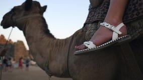 Bodypart femenino en el camello almacen de video