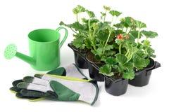 Bodziszka kwiatu taca z wodą może i ogrodowe rękawiczki Obrazy Stock