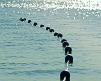 Boe messe insieme insieme sulle belle acque frizzanti blu nel primo mattino La sicurezza buoys per creare l'area di nuoto sicura  Fotografia Stock