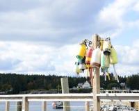 Boe variopinte dell'aragosta della Maine Fotografia Stock