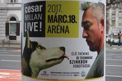 Boedapest: 1 februari 2017 - Hond Whisperer met Cesar Millan aan boord stock foto