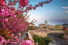 Boedapest, Hongarije - beroemd Buda Castle Royal Palace op een de Lentemiddag met bloeiende kersenbloesem royalty-vrije stock afbeelding