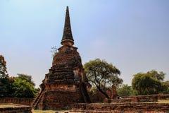Boeddhistische tempel met oude stupa in Ayutthaya, Bangkok, Thailand stock afbeelding
