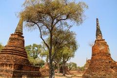 Boeddhistische tempel met oude stupa in Ayutthaya, Thailand royalty-vrije stock foto's