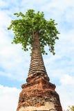 Boeddhistische tempelruïnes Royalty-vrije Stock Fotografie