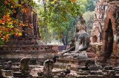 Boedha in ayutthaya Royalty-vrije Stock Afbeelding