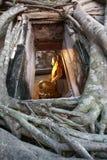 Boedha in Boomkader, Samut Songkhram, Thailand Stock Foto's