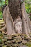 Boedha is in de houten wortel stock foto
