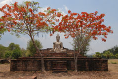 Boedha Statue under red tree Royalty Free Stock Image