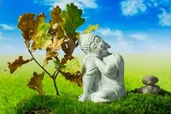 Boedha, stenen, eiken boom op de weide Stock Afbeelding