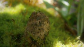 Boeg op groen mos stock foto's