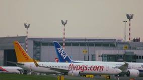 Boeing 737 των αερογραμμών Pegasus που κινούνται προς το τερματικό απόθεμα βίντεο
