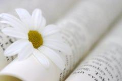Boek en Daisy Royalty-vrije Stock Afbeeldingen