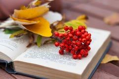 Boek met ashberry op de bank Stock Afbeeldingen