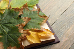 Boek met de herfstbladeren Stock Fotografie