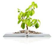 Boek met muntstukken en boom. Stock Foto