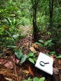 Boek in tropisch regenwoud Royalty-vrije Stock Afbeeldingen
