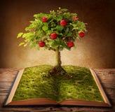 Boek van kennis Royalty-vrije Stock Foto