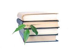 Boeken en boom Stock Fotografie