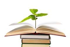Boeken en installatie stock foto's
